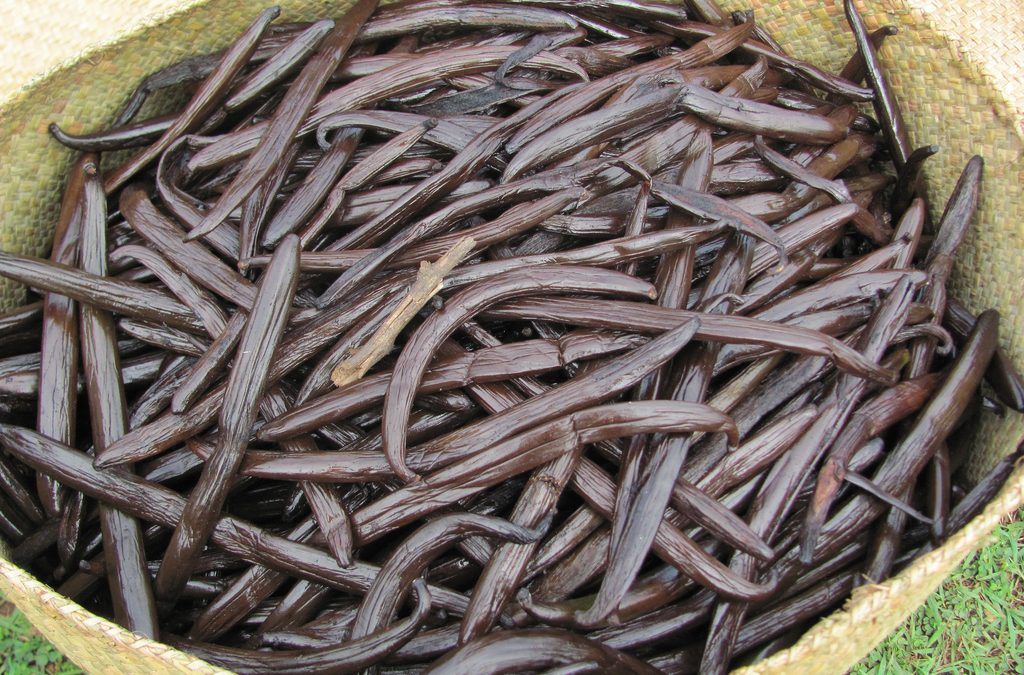 History of Vanilla